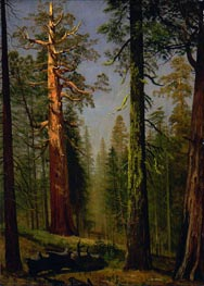 Bierstadt | The Grizzly Giant Sequoia, Mariposa Grove, California, c.1872/73 | Giclée Canvas Print