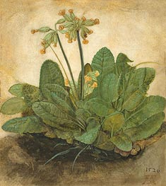 Durer | Tuft of Cowslips | Giclée Canvas Print