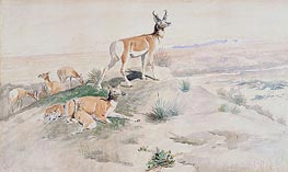 Charles Marion Russell   Antelope, 1894   Giclée Paper Print