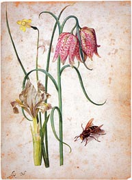 Georg Flegel | Narcissus, Iris, Fritillaria and Hornet | Giclée Canvas Print