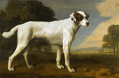 Viscount Gormanston's White Dog, 1781 | George Stubbs | Painting Reproduction