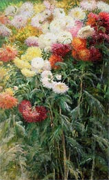 Caillebotte | Clump of Chrysanthemums, Garden at Petit Gennevilliers | Giclée Canvas Print
