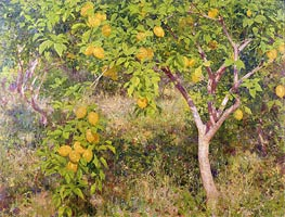 Tuke | The Lemon Tree | Giclée Canvas Print