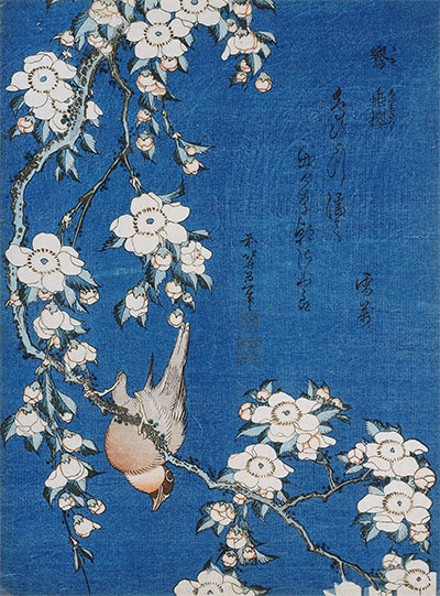 Bullfinch and Weeping Cherry Blossoms from Serie 'Flowers and Birds', 1834 | Hokusai | Giclée Paper Print