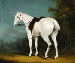 Jacques-Laurent Agasse | A Lady's Grey Hunter, c.1806 | Giclée Canvas Print