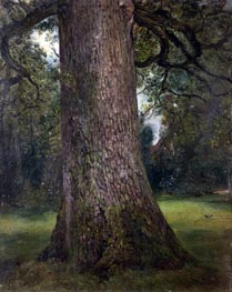 Constable | Study of the Trunk of an Elm Tree | Giclée Canvas Print
