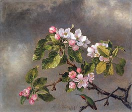 Martin Johnson Heade | Hummingbird and Apple Blossoms | Giclée Canvas Print