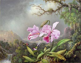 Martin Johnson Heade | Study of an Orchid | Giclée Canvas Print