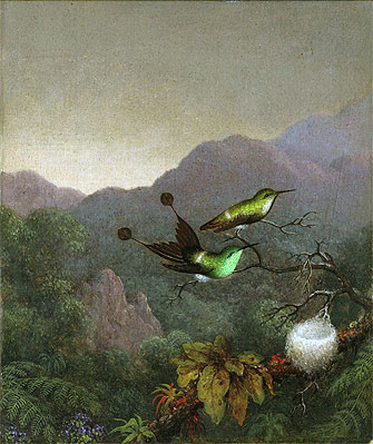 Martin Johnson Heade | Racket-Tail Brazil, c.1863/65 | Giclée Canvas Print