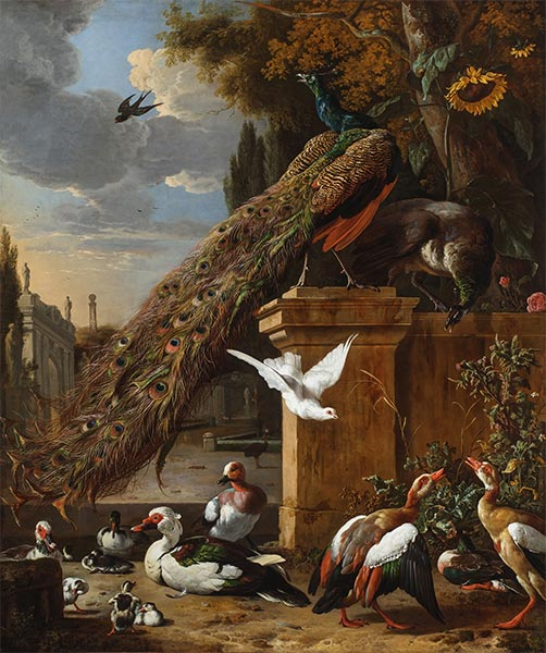 Peacocks and Ducks, c.1680 | Melchior d'Hondecoeter | Giclée Canvas Print