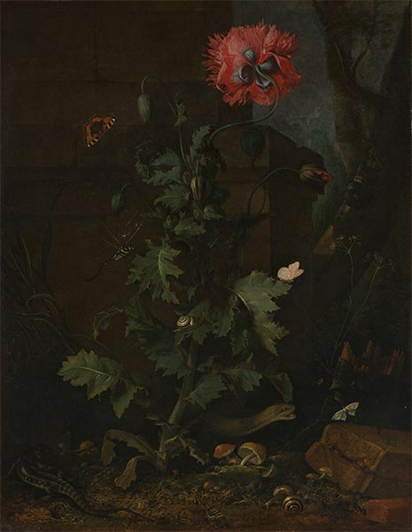 Still Life with Poppy, Insects and Reptiles, c.1670 | van Schrieck | Giclée Canvas Print