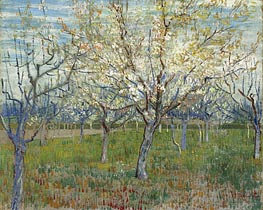 Vincent van Gogh | Orchard with Blossoming Apricot Trees | Giclée Canvas Print