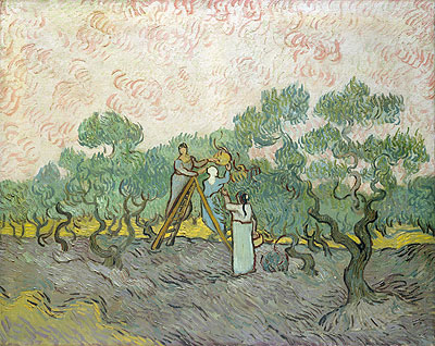 Vincent van Gogh | Olive Picking, 1889 | Giclée Canvas Print